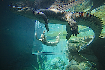 Saltwater crocodile cage diving