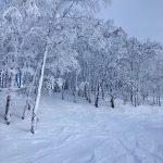 Trees of Rusutsu Resort